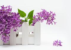 Beautiful bouquet of lilac and a small fence on the white background Stock Photos