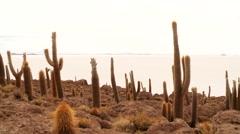 Surreal senery: Cacti on Salt flat, Bolivia. Salar de Uyuni - stock footage