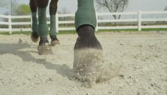 SLOW MOTION: Close up of horses hooves walking in menage Stock Footage