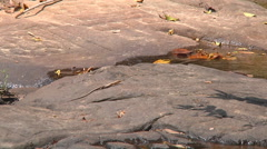 Stock Video Footage of Kbal Spean River and reptile at Angkor, Siem Reap, Cambodia