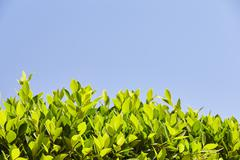 Stock Photo of Bright green leaves against the blue sky, at the bottom of the frame, sheets