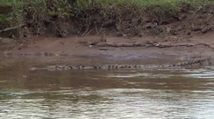 Crocodile Swimming in the lakes of Costa Rica Stock Footage