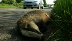 Dead badger by side of road, 4k, UHD Stock Footage