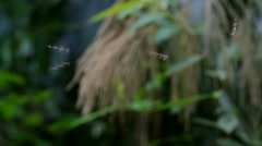 Small insects is flying Stock Footage