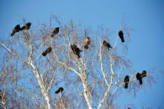 Birds of the steppes - stock photo