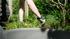 Gardener weeding flower bed, 4k, UHD - stock footage