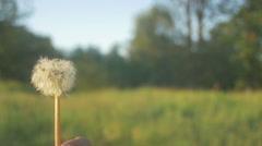 Blowball dandelion slowmotion blow Stock Footage
