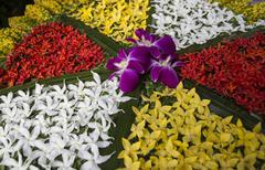 Ixora petal decor art Stock Photos