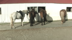 Icelandic Horses in stable Stock Footage