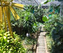 Pathway in the tropical garden Stock Photos