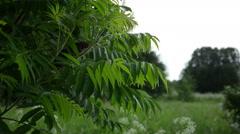 Garden decorative tree in the rain Stock Footage