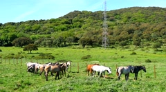 Herd of horses in a meadow, wild life (4K) - stock footage