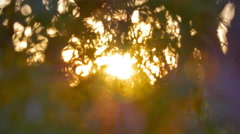 3 in 1 video! Sun rays light through the tree branch in the spring forest Stock Footage