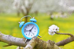 An alarm clock on a branch of a tree, nature background Stock Photos