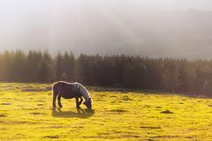 Stock Photo of horse with sunrays