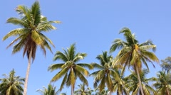 coconut trees and blue sky - stock footage
