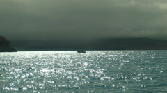 Whale Watching in ICELAND - CIRCA AUGUST, 2014 Stock Footage