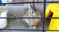 rabbit in  cage moves with  nose Footage