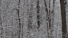 Snowfall in a wood - Parco di Monza - Italy Stock Footage