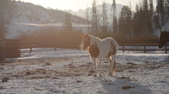 Horse breathing- breath steam -in field in winter Arkistovideo