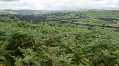 Ferns and  landscape in Brecon Beans National Park ( Wales) Stock Footage