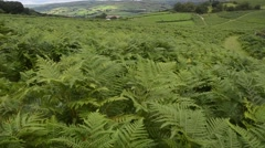Landscape with ferns moved by the wind in the park of Brecon Beans Stock Footage