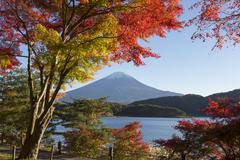 Maple leaves change to autumn color at Mt.Fuji, Japan Stock Photos