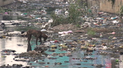 Stray dog searches for food in a polluted canal in India Stock Footage