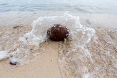 Waves crash  coconut Stock Photos