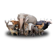 group of asia animals - stock photo