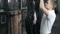 Horse Behavior - stock footage