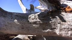 Ocean trees on the beach Stock Footage