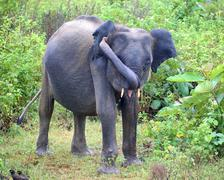 Young indian elephant in jungle Stock Photos