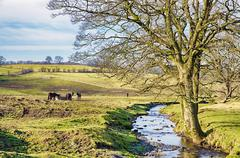 English rural scene with a stream and a bare tree - stock photo