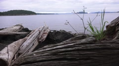 Washed up driftwood, Orcas Island Stock Footage