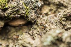 Colony Of Ants Search For Food Stock Photos
