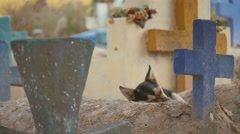 Loyal dog aside owner grave Stock Footage