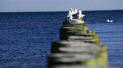 Groin in the Baltic Sea with herring gulls Stock Footage
