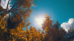 Sunlight In The Leaves In Autumn Stock Footage
