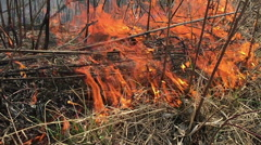 Fire rages in long grass, foreground slow motion Stock Footage