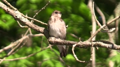 Close up of small bird sitting on branch swallow nature wildlife Stock Footage