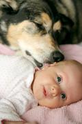 Pet Dog Kissing Newborn Baby Girl Stock Photos