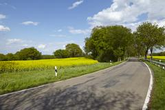 Road with trees and a blossoming, yellow colza field - stock photo