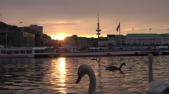 ULTRA HD 4K Beautiful sunset Hamburg cityscape lake ferry swan bird landmark day Stock Footage