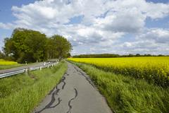 Bike lane with trees and a blossoming, yellow colza field - stock photo