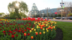 Canada's National Gallery with tulips in the foreground Stock Footage