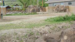 Zoo Train Saffari Stock Footage