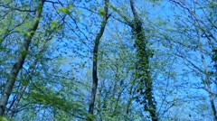Trees On a Breez Stock Footage