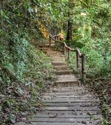 Stairway in the Deciduous forest - stock photo