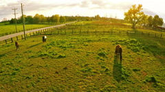 Bluegrass horse farm Arkistovideo